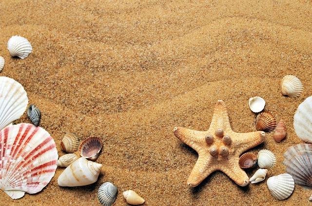 mušle na písku